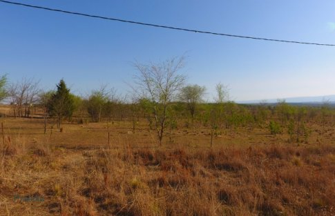lote reartes (16)