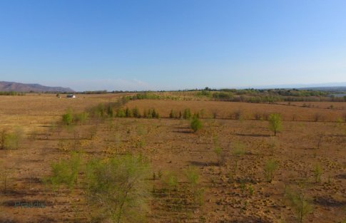 lote reartes (20)