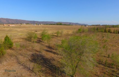 lote reartes (21)