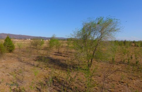 lote reartes (22)